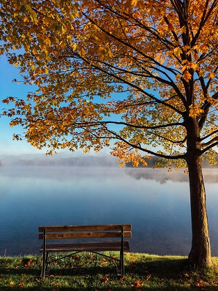 Managed - Maple Tree_Lake